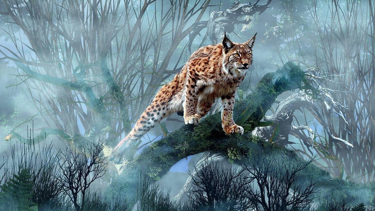 canadian-lynx-hunting-wallpaper-1