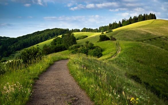 path_green_fields-wide