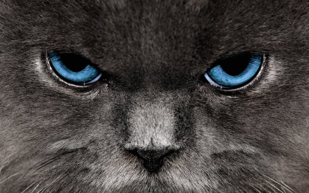 angry_cat_2560x1600