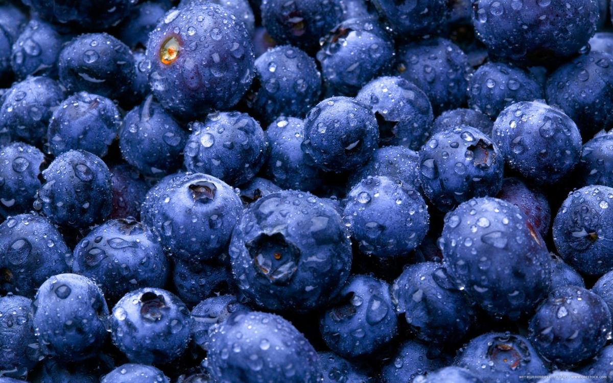 nature-fruits-food-water-drops-berries-blueberries-picture-gallery